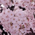 宝幸園の造園専門のホームページを公開致しました。