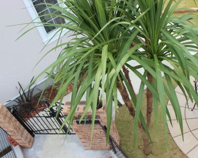 千葉県佐倉市 H様邸のお庭|洋風造園の施工例