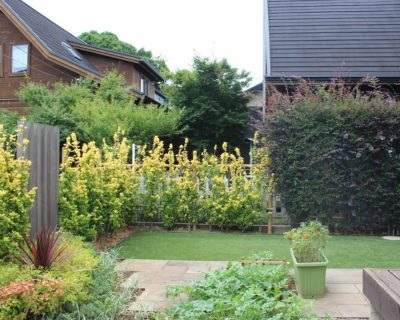 青々とした緑に快適性を加えた癒しの空間|千葉県佐倉市ユーカリが丘のI様邸のお庭リフォーム