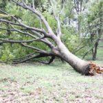 大切な庭木の台風対策