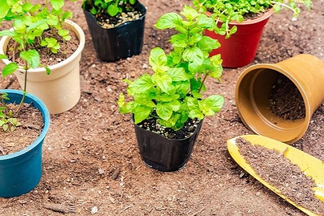 鉢物の植物
